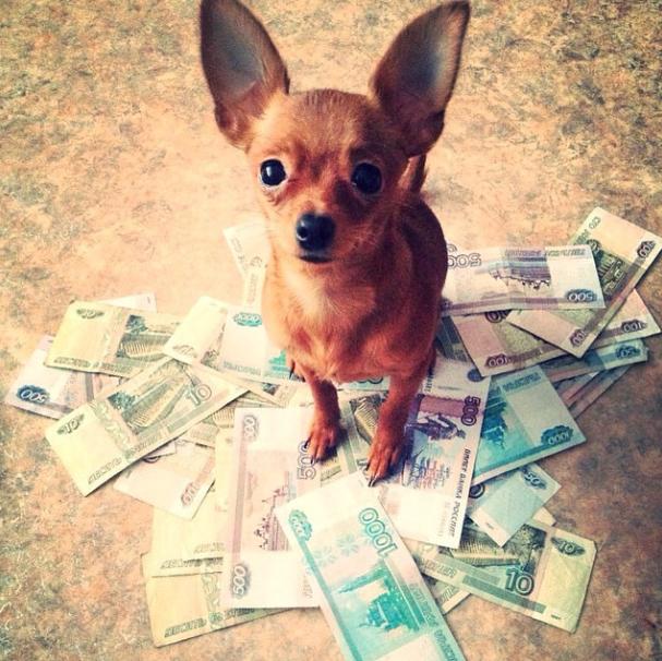 Ricos. (Foto: Reprodução / Instagram / Rich Dogs Of Instagram)