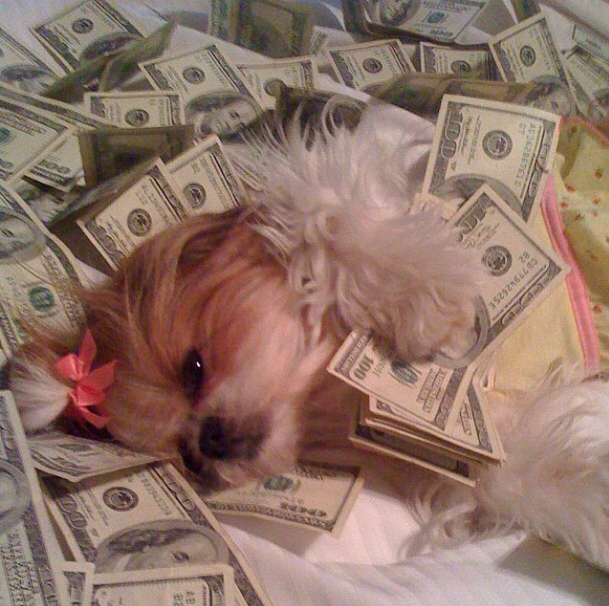 Dinheiro não é problema para esses cães. (Foto: Reprodução / Instagram / Rich Dogs Of Instagram)