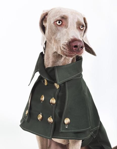 Luxo para cães. (Foto: Reprodução / Instagram / Happy Staffy)