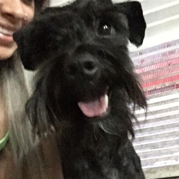 O cão Bruno foi adotado por Vanessa. (Foto: Reprodução / Instagram)