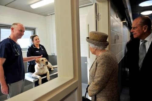 Foto: Battersea Dogs & Cats Home.