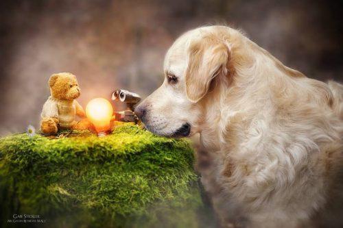 Gabi-Stickler-golden-retriever-urso-fotografia-03