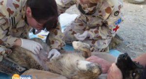 Wylie sendo resgatado por soldados britânicos no Afeganistão. Foto: Reprodução