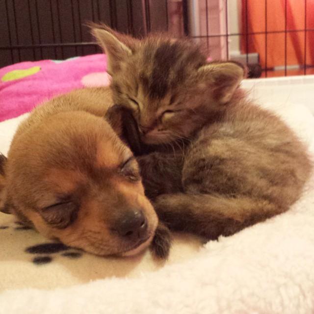 Dormindo juntinhos. (Foto: Reprodução / Facebook)