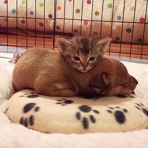 Melhores amigos. (Foto: Reprodução / Facebook)