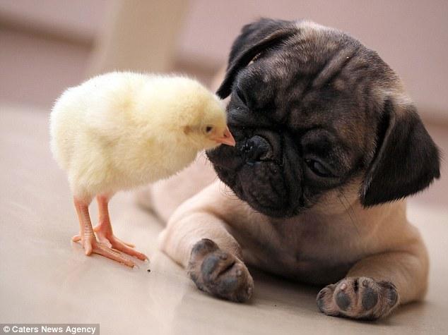 Uma linda amizade. (Foto: Reprodução / Daily Mail UK)