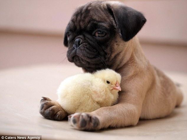 Se sentindo protegido pelo cão. (Foto: Reprodução / Daily Mail UK)