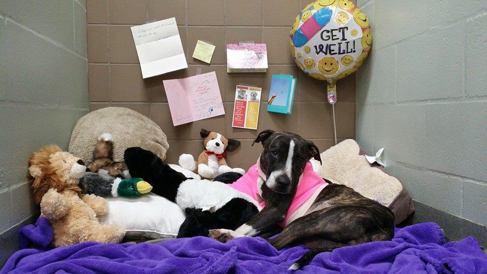 Cabela com os presentes que ganhou.  (Foto: Reprodução / Facebook / Tampa Bay Veterinary Emergence Service)