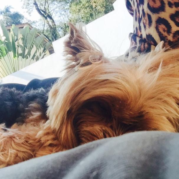A yorkshire descansando. (Foto: Reprodução / Instagram)