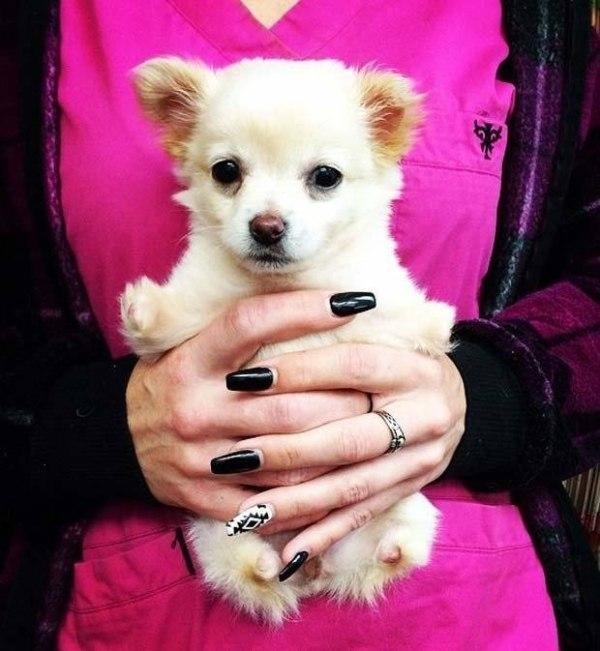 Christine Broyles adotou a cachorrinha. (Foto: Reprodução / Bark Post)