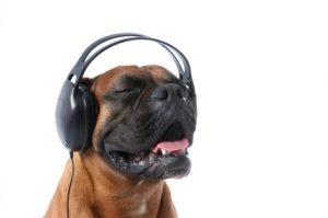 Música clássica acalma os cães. (Foto: Reprodução / Google)