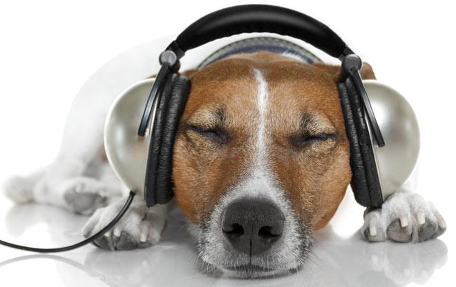 A música clássica pode ajudar cães que sofrem com a ansiedade da separação. (Foto: Reprodução / Google)