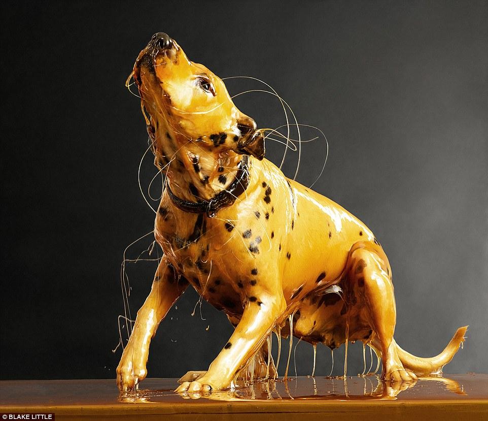 Cachorro coberto com mel. (Foto: Reprodução / Daily Mail UK)