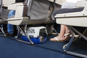 Agora é permitido viajar com cães e gatos de pequeno porte na cabine da Gol. Foto: Reprodução