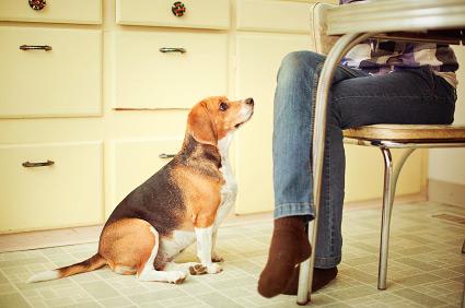 A intuição canina é poderosa. (Foto: Reprodução / Vetstreet)