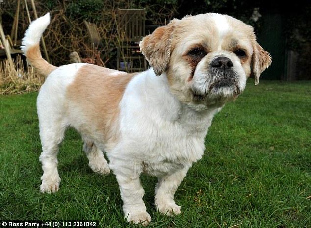 Bentley parece outro cachorro agora. (Foto: Reprodução / Daily Mail UK)