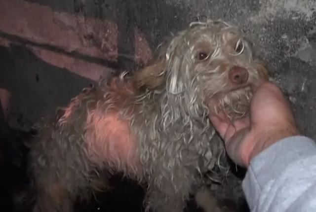 Cachorro que foi resgatado do esgoto. (Foto: Reprodução / Youtube)