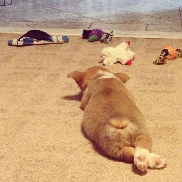 cachorros-cruzam-patas-07