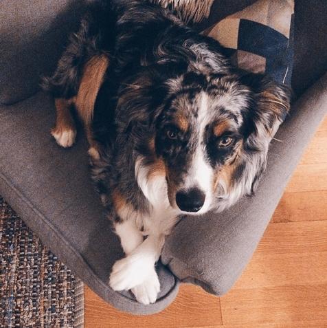 cachorros-cruzam-patas-10