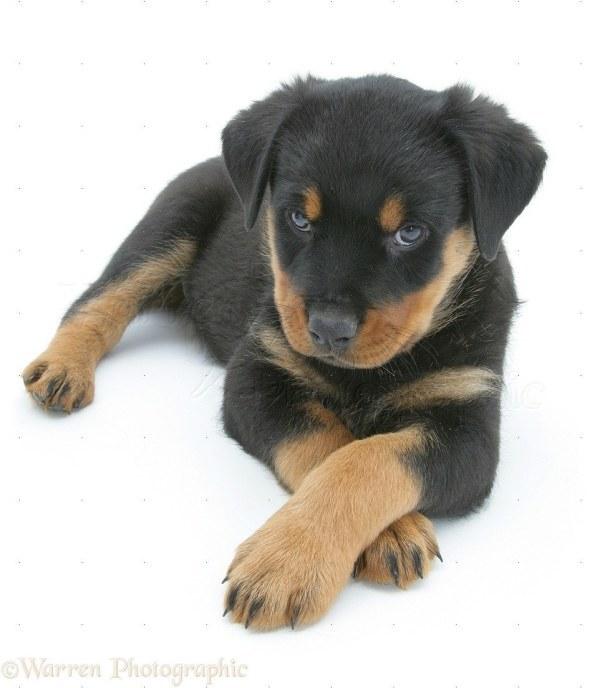 cachorros-cruzam-patas-11
