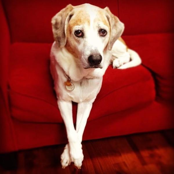 cachorros-cruzam-patas-15