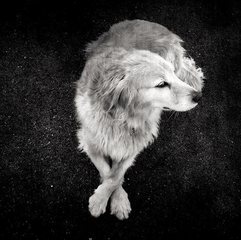 cachorros-cruzam-patas-17