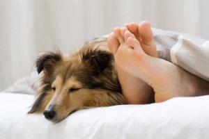 (Foto: Reprodução / The I Love Dogs Site)