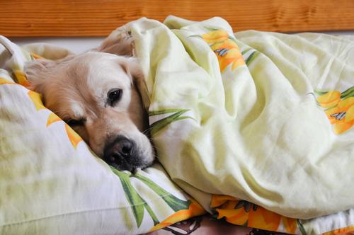 Cachorros adoram a nossa cama! (Foto: Reprodução / The I Love Dogs Site)