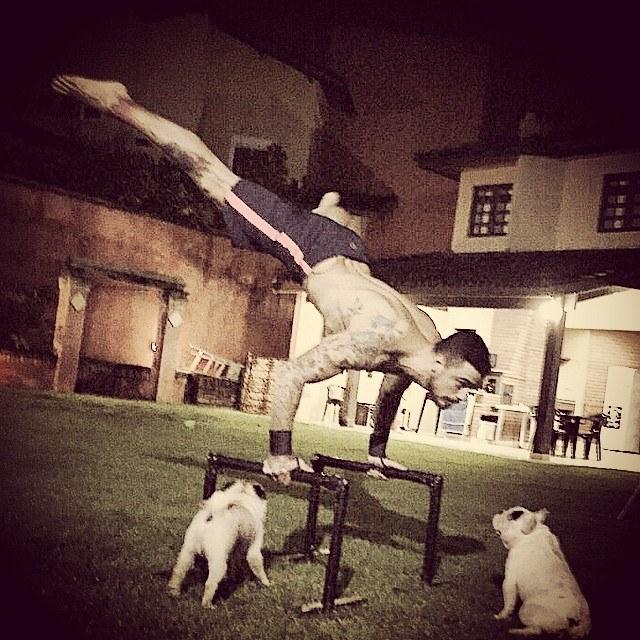 Plateia canina durante os exercícios físicos. (Foto: Reprodução / Facebook)