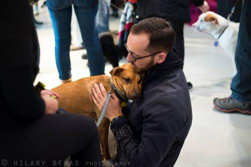 Cachorro escolhido por seu novo tutor. (Foto: Reprodução / Facebook)