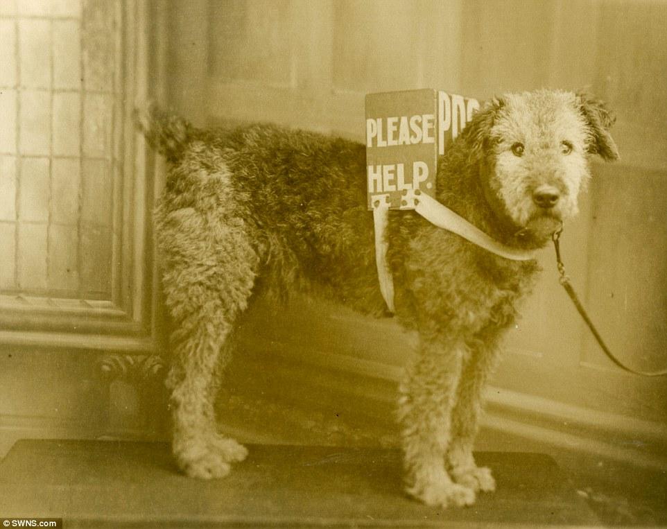 Cachorro trabalhando como mensageiro. (Foto: Reprodução / Daily Mail UK)