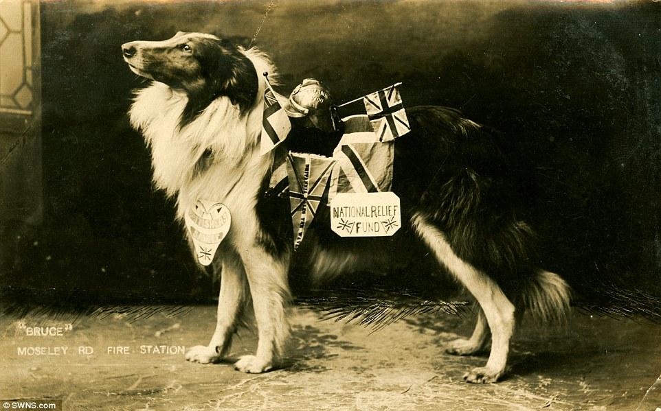 Bruce, da raça Rough Collie, era mascote de um quartel de bombeiros na Inglaterra. (Foto: Reprodução / Daily Mail UK)