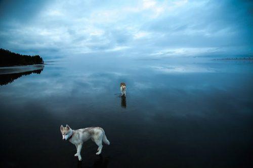 Foto: Fox Grom