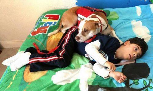 O cão Stevie com Anthony. (Foto: Reprodução / Metro UK)