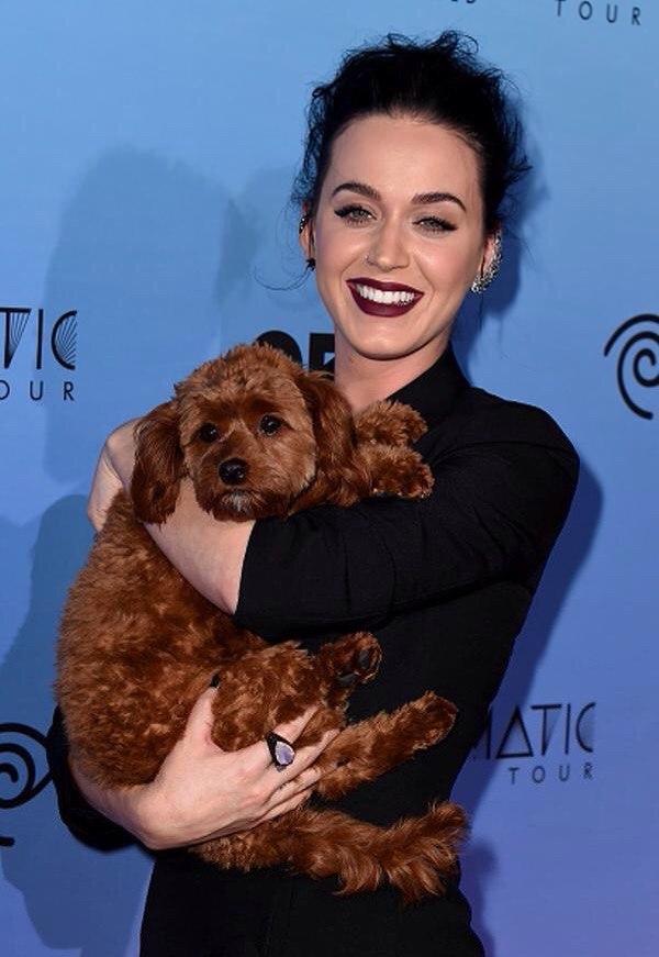 Katy Perry e Butters. Foto: Reprodução