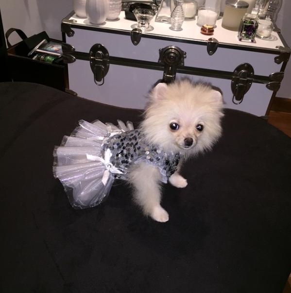 Tapioca é a nova cachorra de Celso Zucatelli. (Foto: Reprodução / Instagram)