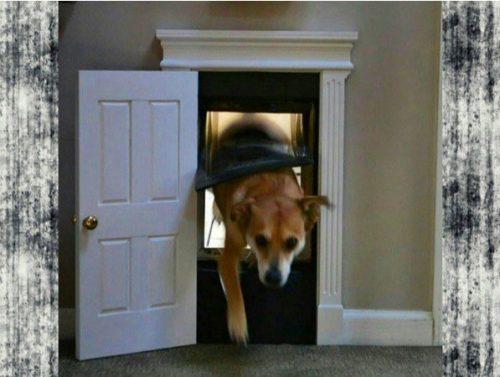 portinhas-pet-cachorro-lista-02