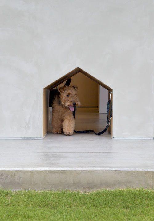 portinhas-pet-cachorro-lista-13