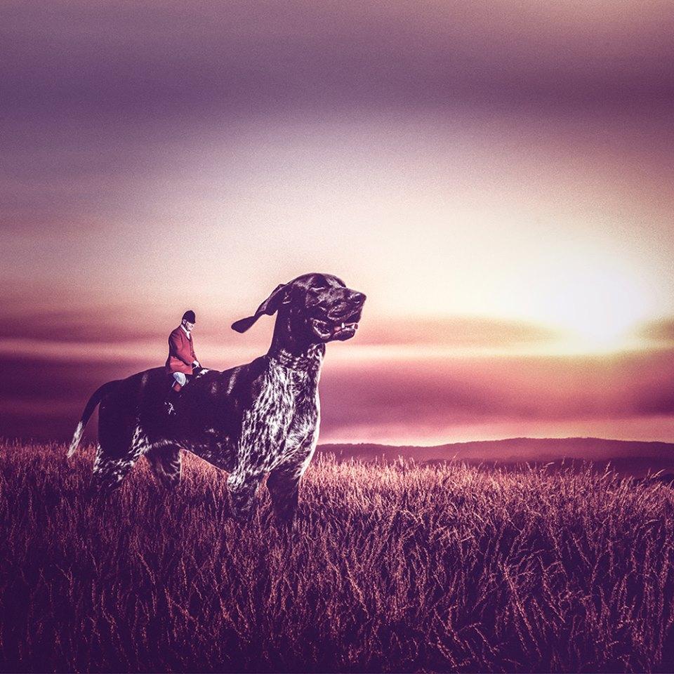 O cão Winston. (Foto: Reprodução / Facebook / Stuart Holroyd)