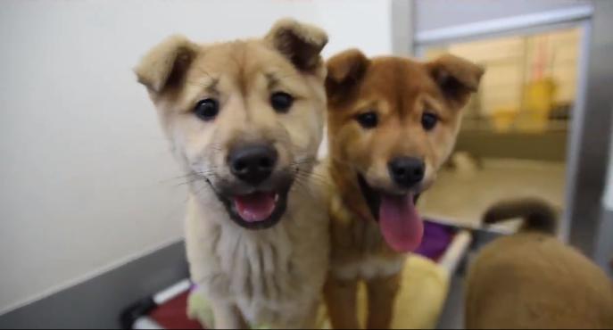 Os 57 cachorros já estão em um abrigo nos Estados Unidos. (Foto: Reprodução / Facebook)