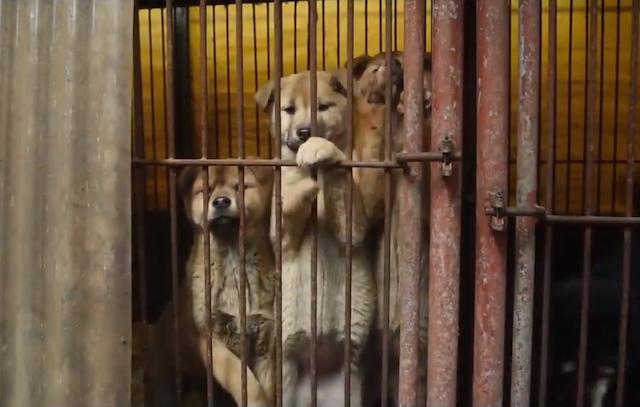 Os cachorros viviam em gaiolas. (Foto: Reprodução / Facebook)