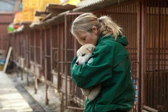Lola Webber trabalhou no resgate dos cães. (Foto: Reprodução / Facebook)