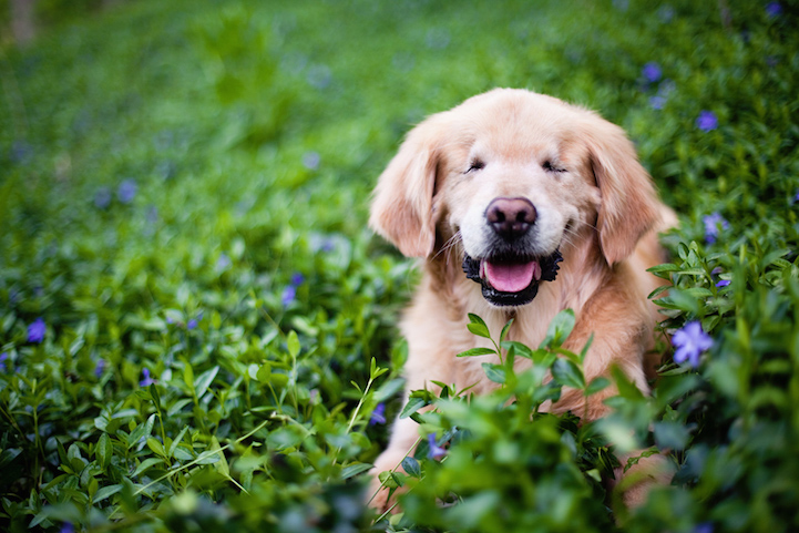 Foto: Stacey Morrison/Happy Tails Photography