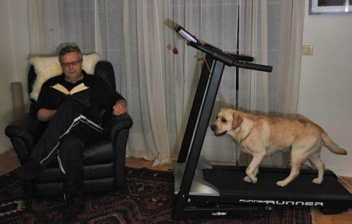tutores-preguicosos-dog-walker-fotos-pdd (10)