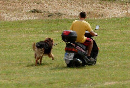 tutores-preguicosos-dog-walker-fotos-pdd (13)