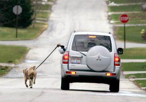 tutores-preguicosos-dog-walker-fotos-pdd (4)