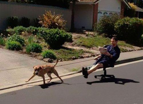 tutores-preguicosos-dog-walker-fotos-pdd (5)