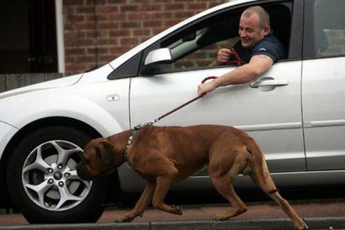 tutores-preguicosos-dog-walker-fotos-pdd (8)