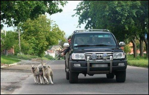 tutores-preguicosos-dog-walker-fotos-pdd (9)