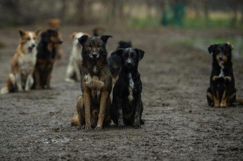 Sasa-Pesic-abrigo-servia-05